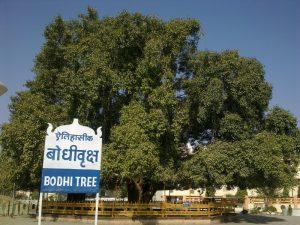1. Bodhi_Tree_at_Deekshabhoom_Nagpur