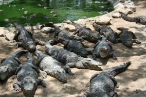 Guindy National Park, Crocodile bank & Zoological Park- Chennai, Things to do, Travel