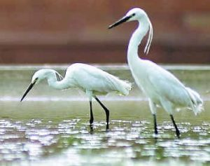 Salim Ali Bird Sanctuary- Bird,Top Bird Sanctuary , India