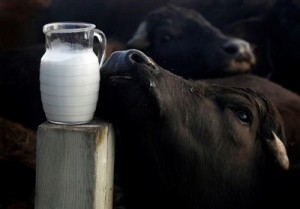 cow's milk,10 Alternatives, Cow Milk, Milk, Dairy alternatives, Non-Dairy alternatives