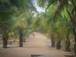 Tarkarli beach7